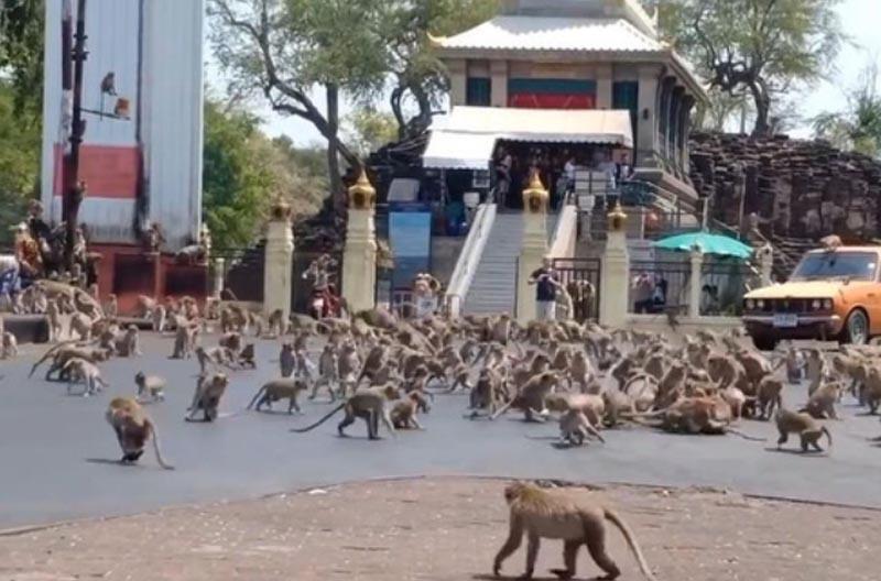 タイの観光地で暴走するサルの群れ