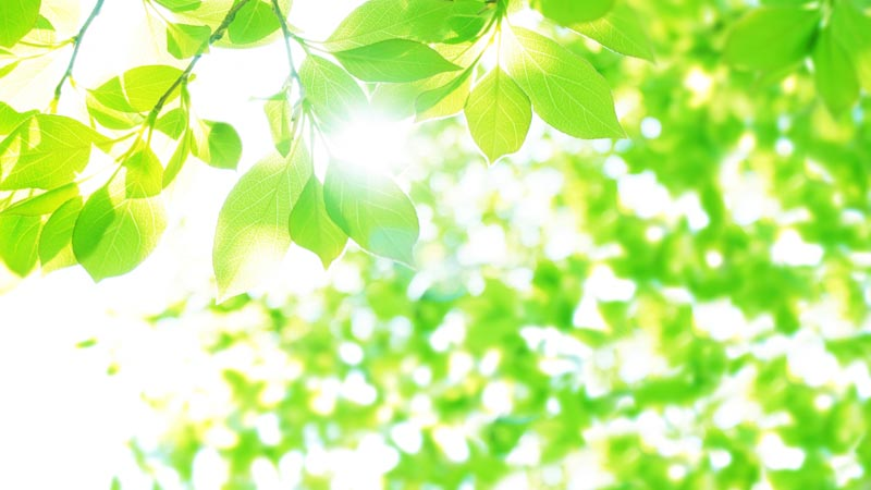 光り輝く木々の葉