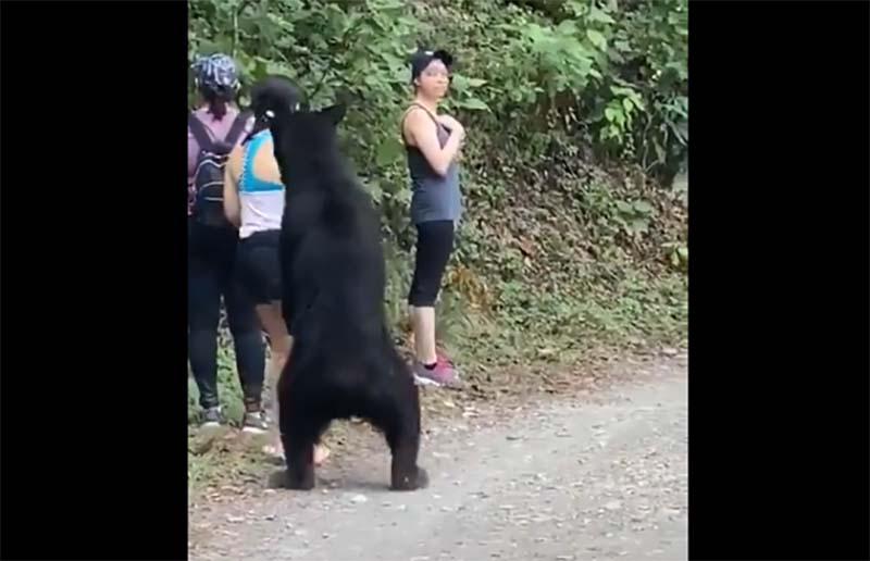 クマに出会ったら