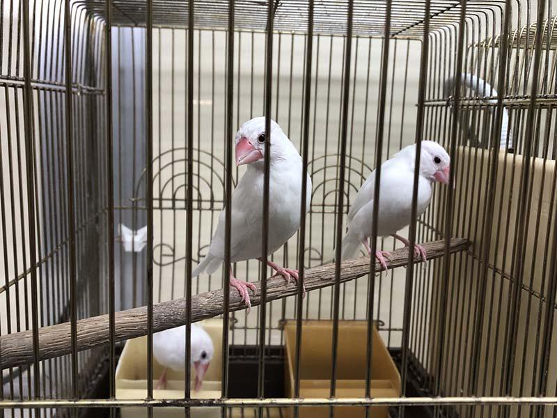 籠の中の鳥