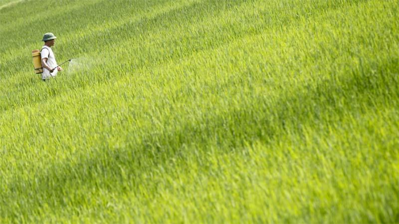 農薬の輸入問題