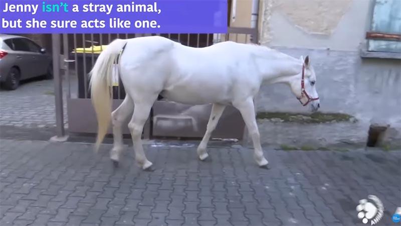 フランクフルトを散布する馬