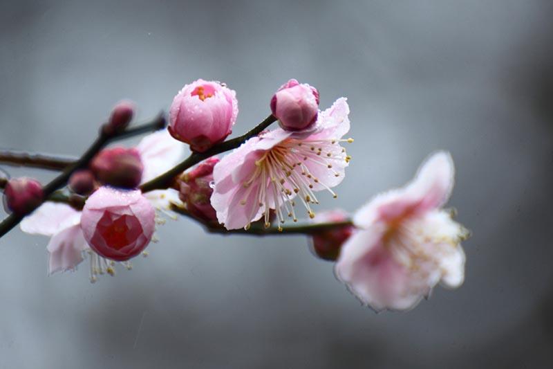 寒さの中で凛と咲く花