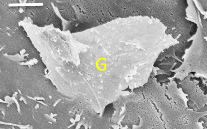 グラフェンの細胞毒性